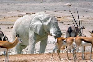 Намибия. Парк-заповедник Этоша