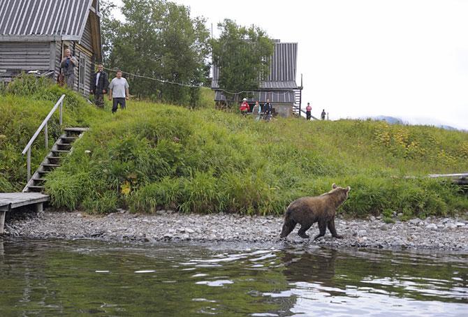 Кода медведь совсем рядом