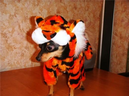 Собачий маскарад