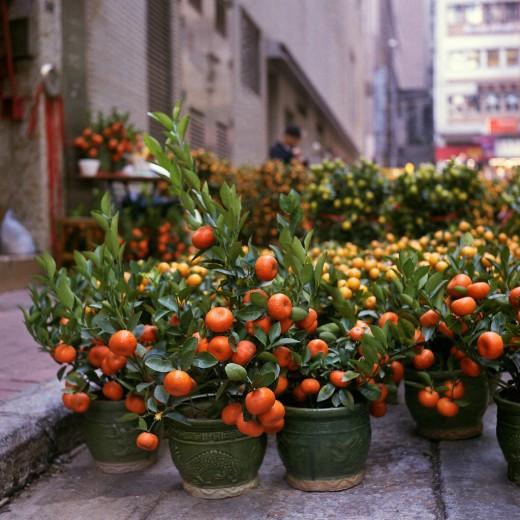 Комнатные растения на заказ