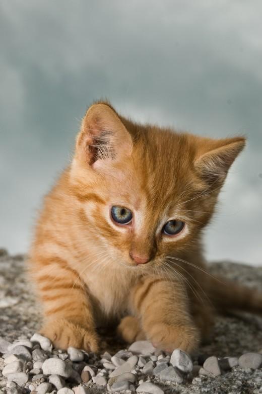 Кошка заберет из дома все плохое