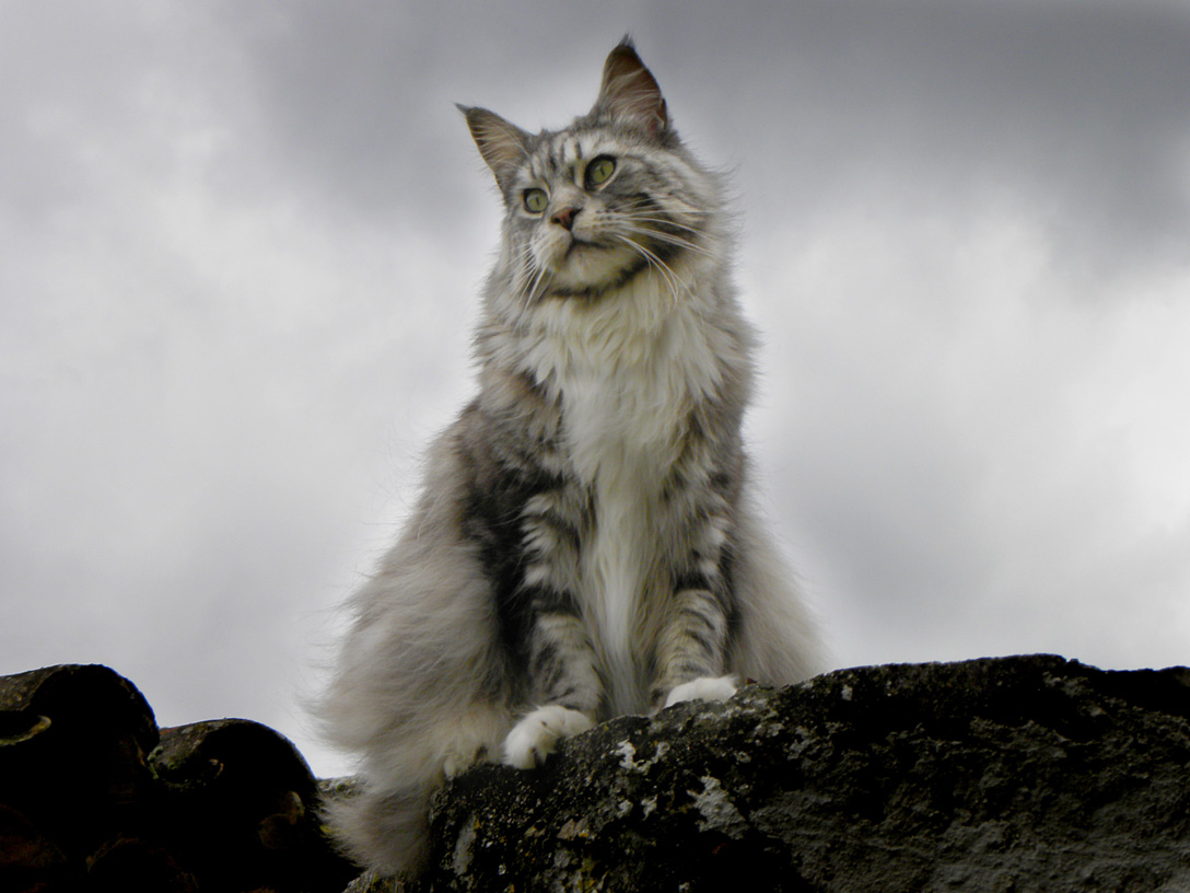 Породы, котов фото, породы котов с фотографиями