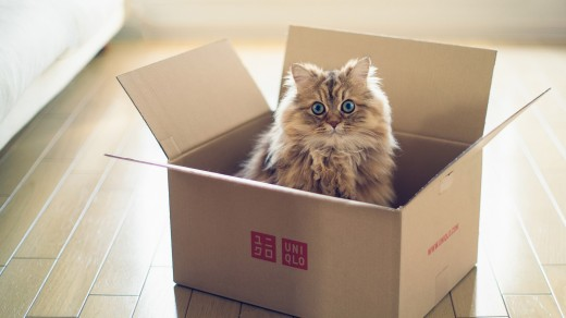 Тягу кошек к коробкам объяснили научно