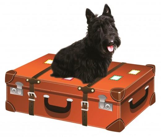 Как путешествовать с собакой?