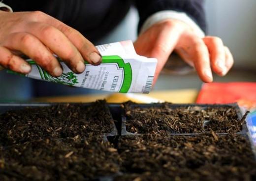 Как купить семена, чтобы урожай радовал