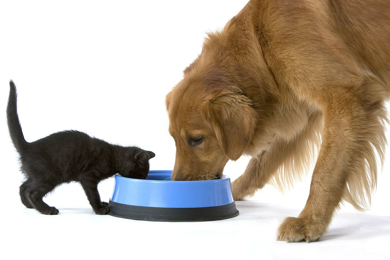 Картинки с кормами для домашних животных словам