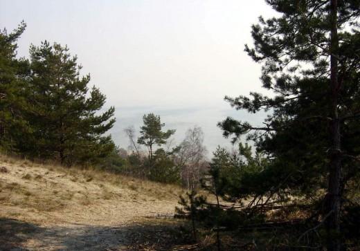 Виды почв в Калининградской области