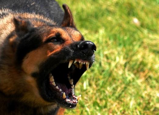 Ультразвук против собак