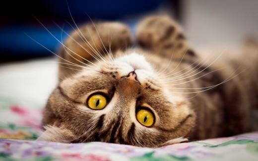 Особенный Whiskas для особенных кошек