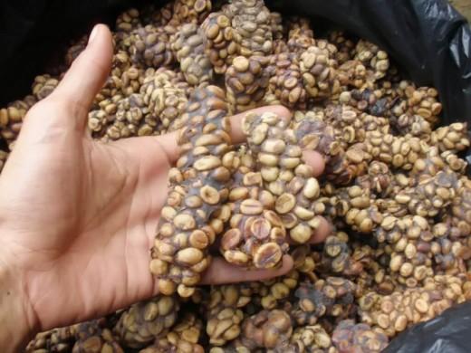 Что известно о кофе из Вьетнама?