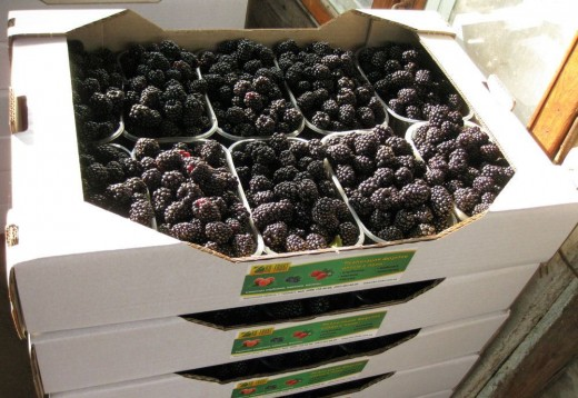 Сохраняем полезные свойства овощей и фруктов: гофротара —  это удобно и выгодно