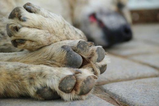 Коронавирус и домашние животные: как уберечь себя и питомцаКоронавирус и домашние животные: как уберечь себя и питомца