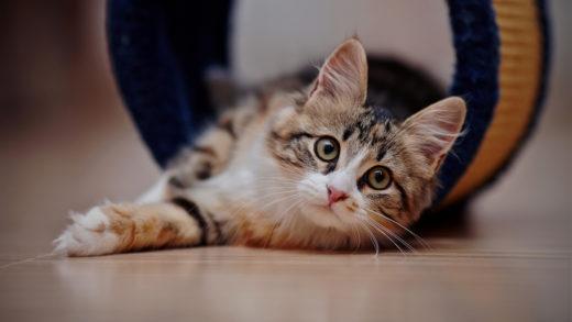 Что нужно купить для кота или кошки в доме?