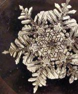 Фотография снежинки выставлена на аукцион