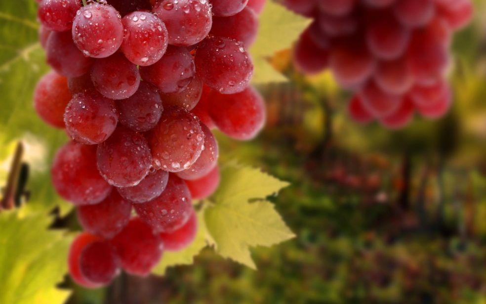 Интересные факты о винограде