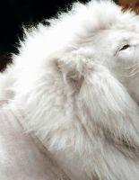 Животные альбиносы
