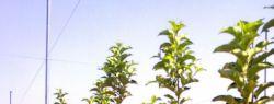 Саженцы для сада – где садовник может приобрести все необходимое?