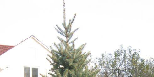Как заказать живую елку в горшке через интернет?