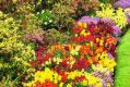 Цветник без антрактов