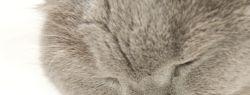 «Whiskas» — корм для здоровых кошек