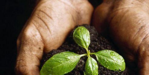 Растительный грунт – состав, свойства, применение