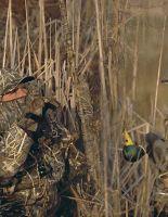 Какие костюмы для охоты сейчас наиболее оптимальны?