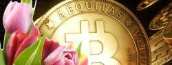 Криптовалюта — тюльпаны 21-го века? Не в этот раз!