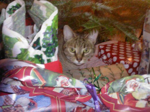 Новый год и кошки