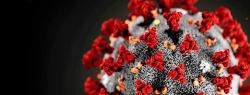 Смертельный вирус из Китая. Что это, откуда взялся и почему так опасен?