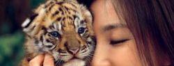 Международный день тигра отмечается 29 июля