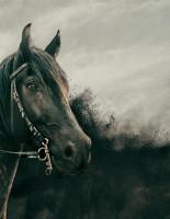 Новый фильм от продюсера Леонардо Ди Каприо и погружение в необъяснимое: премьеры октября на HISTORY