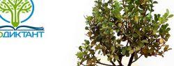 Во Всероссийский день без бумаги Экодиктант отмечает: 100 кг макулатуры спасает 1 дерево