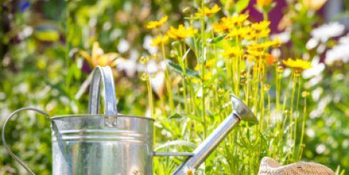 Популярные сопутствующие товары для сада и огорода