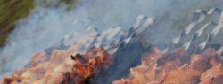 1-2 мая — День шашлыка?
