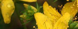 Лекарственные травы могут быть опасны для здоровья