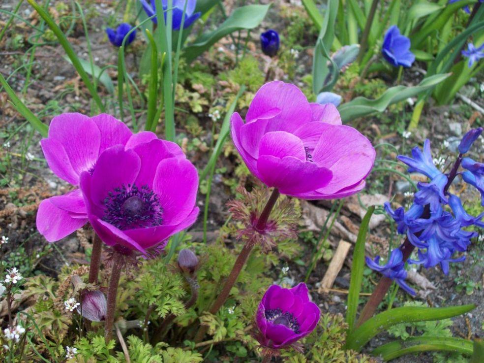 Цветы для меланхолика