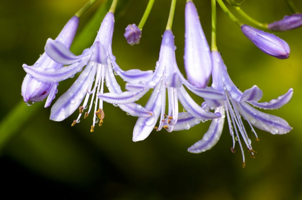 Цветы для сангвиника