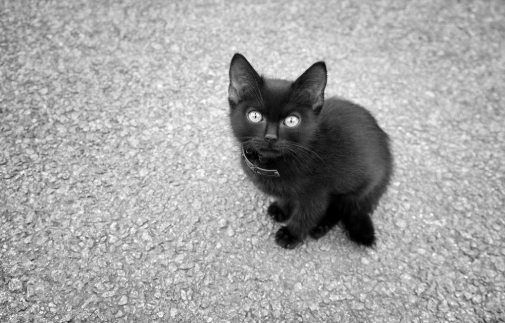 Кошки и суеверия