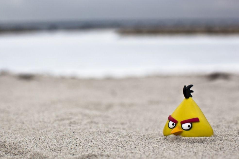 Желтая птица на пляже