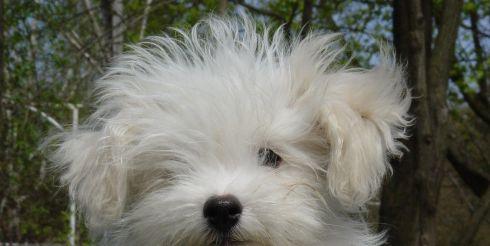 Кинологи вывели первую украинскую породу собак — Одесская домашняя