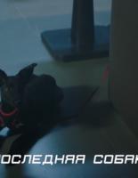 К акции «Da!Животным» при поддержке «Фокс-Экспресс» создан ролик «Лучший друг»